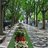 """Iniciativa """"Há Flores na Cidade"""" de Lisboa"""