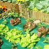 5 Dicas para uma Horta Biodiversa e Saudável