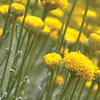 Curso plantas para jardins sem rega em Serralves