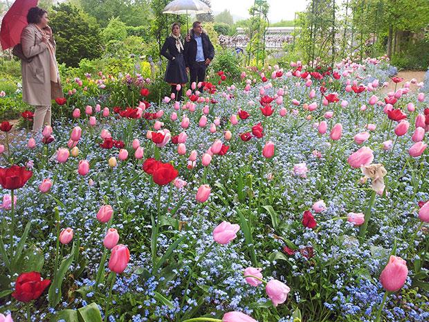 Visita aos jardin de Claude Monet em Giverny.