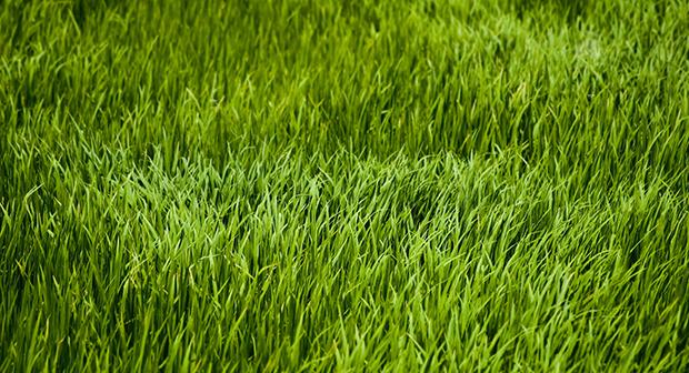 9401_nature_grass2