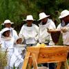 O Mundo das Abelhas e Outros Insetos Polinizadores, o Apiário Pedagógico da Quintinha de Monserrate