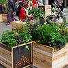 Chelsea Fringe um festival de jardins alternativo
