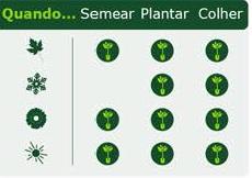 Alface Plant it portal do jardim