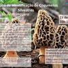 Oficina de Identificação de Cogumelos Silvestres em Vila do Conde