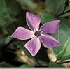 Curso Formativo LPN, Introdução à Botânica e Flora Mediterrânica