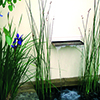 Cuidados com lagos no Outono: conselhos da Royal Horticultural Society