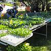 Feira de Jardinagem da Associação Jardins Mediterrânicos