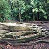 Árvores com Histórias visita guiada Jardim Botânico José do Canto
