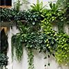 Dicas para usar trepadeiras em pequenos jardins e terraços!