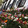 Festa da Flor na Madeira em Maio!