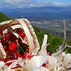 Cereja do Fundão, a cereja que inspira uma Festa, uma Rota Gastronómica e até passeios de balão