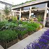 Jardins Aromáticos