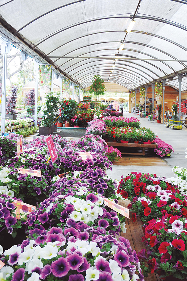 Flower&Garden folheto promocional-2291 copy