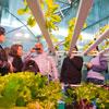 Expojardim; combate às pragas fundamental na saúde da agricultura e jardinagem