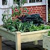 Dicas: Legumes em vasos e/ou floreiras