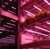 Empresa portuguesa CoolFarm apresenta solução inovadora cultiva alimentos saborosos