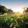 """""""Fascination of Plants Day"""" 2015: Monserrate, Jardins do Mundo e outras atividades nos parques e monumentos de Sintra em maio"""