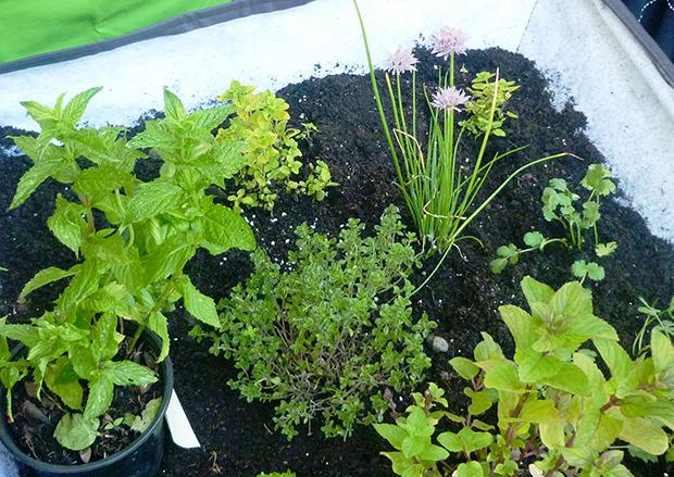 Substituir o Sal por Ervas Aromáticas  Portal do Jardimcom