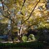 Parque Botânico do Monteiro-Mor, um paraíso em Lisboa