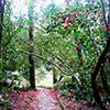 """International Camellia Society distingue Parque da Pena como """"Jardim de Camélias de Excelência"""""""