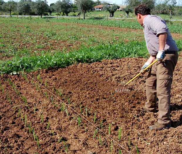 Preparação de terra para terceiro rego