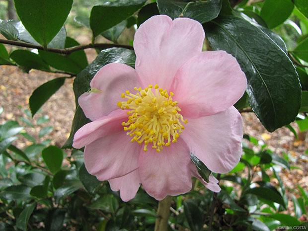 Sakura zukuyo