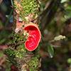 Registadas mais de 100 espécies de cogumelos no Buçaco