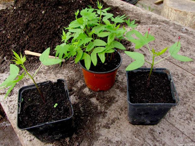 Sementeira-de-plantas-anuais-e-ornamentais-em-geral-10