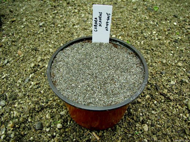 Sementeira-de-plantas-anuais-e-ornamentais-em-geral-6