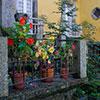 Plantas em vasos são fáceis de cuidar, alguns conselhos a seguir aquando da sua escolha, já a pensar na Primavera.