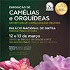 Exposição de Camélias e Orquídeas volta ao terreiro do Palácio Nacional de Sintra