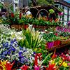 Uma flor, uma festa na Madeira