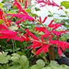Curso prático: Cultivo de Plantas Aromáticas, Medicinais e Condimentares (2ª edição)