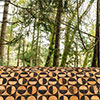 """Obras da exposição de arte contemporânea """"Point of View"""" começam a ganhar forma no Parque da Pena"""