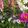 Plantas vivazes usadas em pequenos jardins