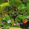 Ruscillo's Cottage Garden, verdadeiramente encantador feito á medida dos seus donos e dos netos