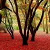 Outubro na Horta e no Jardim
