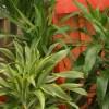 Jardim Interior: Uma lufada de frescura!