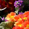 Vasos de Primavera