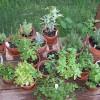 Dica: Plantas aromáticas