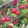 Árvores de Fruto: Saboreie o seu Jardim!
