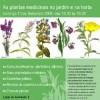 Atelier de Plantas Medicinais-Sintra