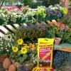 Floragard- Novidades 2010