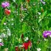 10 ideias para aumentar a biodiversidade no seu jardim!
