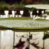 Projecto Europeu poupa 25 mil euros ao Botânico de Coimbra