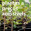 Plantas ornamentais a preços acessíveis na Mata do Bussaco