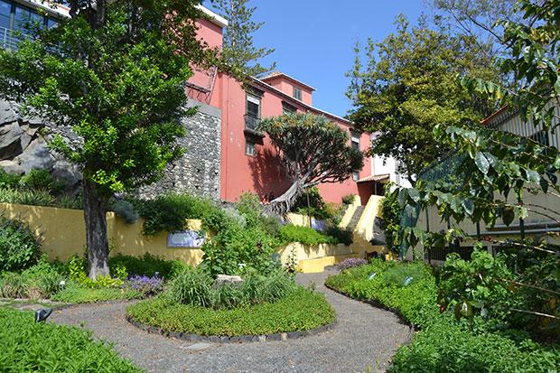 Dragoeiro do jardim das aromáticas no Funchal