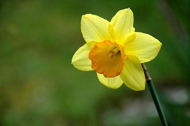 flower-661585_1920