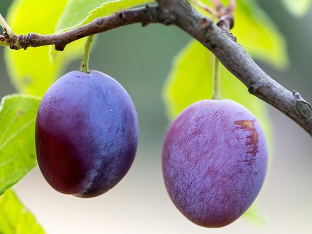 fruit-940100_1280